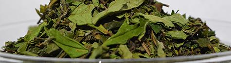 Bijeli čaj