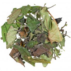 Bijeli čaj Pai Mu Tan BIO